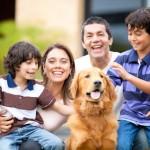 Apprenez à votre chien à être sociable
