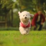 Les secrets de l'entrainement d'un chien